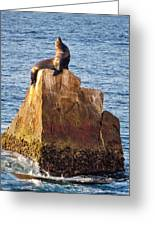 Sunbathing Sea Lion Greeting Card