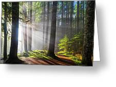 Sunbeams Along Hiking Trails Greeting Card
