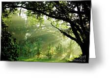 Sunbeams In The Forest Greeting Card