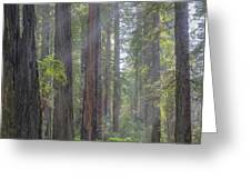 Sunbeams Through The Forest Greeting Card by Paul Schultz