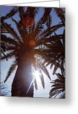 Sunbeams Through The Palms Greeting Card