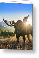 Sunburst In The Antlers Greeting Card