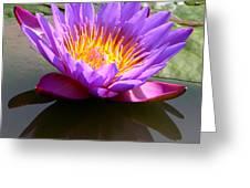 Sunburst Lily Greeting Card