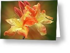 Sunburst Orange Azalea Greeting Card