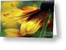 Sunburst Petals - 2 Greeting Card
