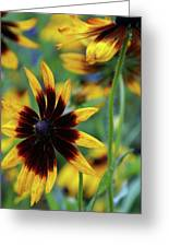 Sunburst Petals Greeting Card