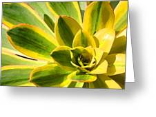 Sunburst Succulent Close-up 2 Greeting Card