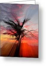 Sunburst Through Palm Tree Greeting Card