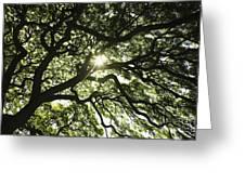 Sunburst Through Tree Greeting Card
