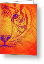 Sunburst Tiger Greeting Card