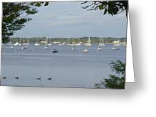 Sunday Morning Swim On Manhasset Bay In Port Washington, Ny Greeting Card