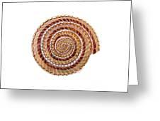 Sundial Shell Greeting Card
