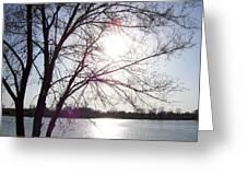 Sundown In Tree Greeting Card
