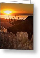 Sunet Silhouette Greeting Card