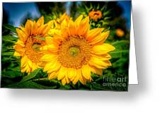 Sunflower 10 Greeting Card