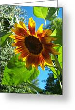 Sunflower 101 Greeting Card