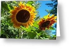 Sunflower 102 Greeting Card