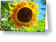 Sunflower 103 Greeting Card