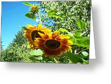 Sunflower 106 Greeting Card