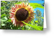 Sunflower 107 Greeting Card
