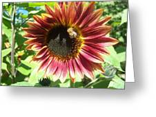 Sunflower 108 Greeting Card