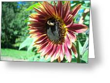 Sunflower 109 Greeting Card