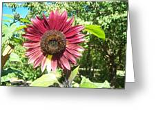 Sunflower 110 Greeting Card
