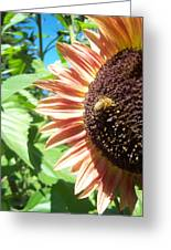 Sunflower 112 Greeting Card