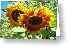 Sunflower 115 Greeting Card