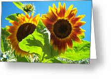 Sunflower 116 Greeting Card