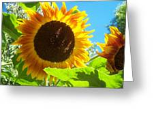 Sunflower 117 Greeting Card