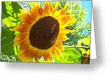 Sunflower 118 Greeting Card