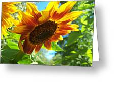 Sunflower  119 Greeting Card