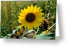 Sunflower 12 Greeting Card
