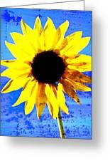 Sunflower 12 Greeting Card