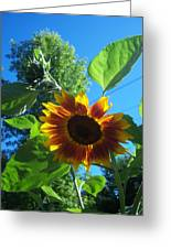 Sunflower 120 Greeting Card