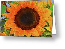 Sunflower 12118-3 Greeting Card