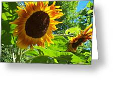 Sunflower 122 Greeting Card