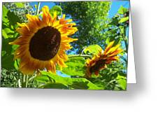 Sunflower 123 Greeting Card