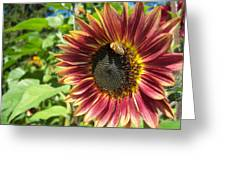Sunflower 129 Greeting Card