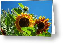 Sunflower 130 Greeting Card