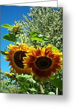 Sunflower 132 Greeting Card