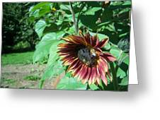 Sunflower 134 Greeting Card