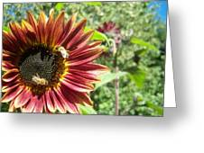 Sunflower 135 Greeting Card