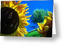 Sunflower 138 Greeting Card