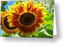Sunflower 140 Greeting Card