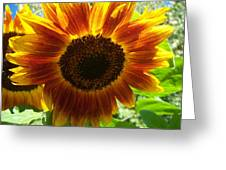 Sunflower 141 Greeting Card