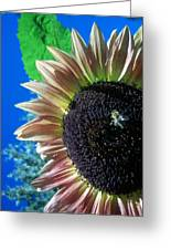 Sunflower 142 Greeting Card