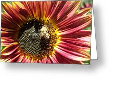 Sunflower 145 Greeting Card