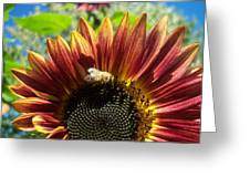 Sunflower 146 Greeting Card
